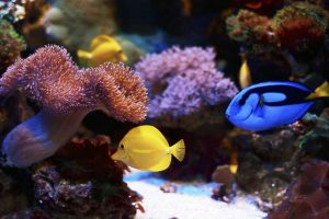 marine sciences