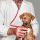 biaya kuliah jurusan kedokteran hewan